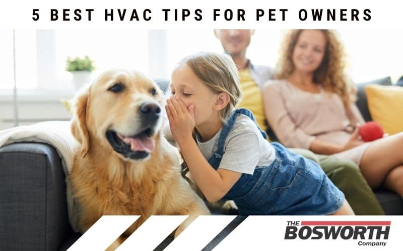5 Best HVAC Tips For Pet Owners