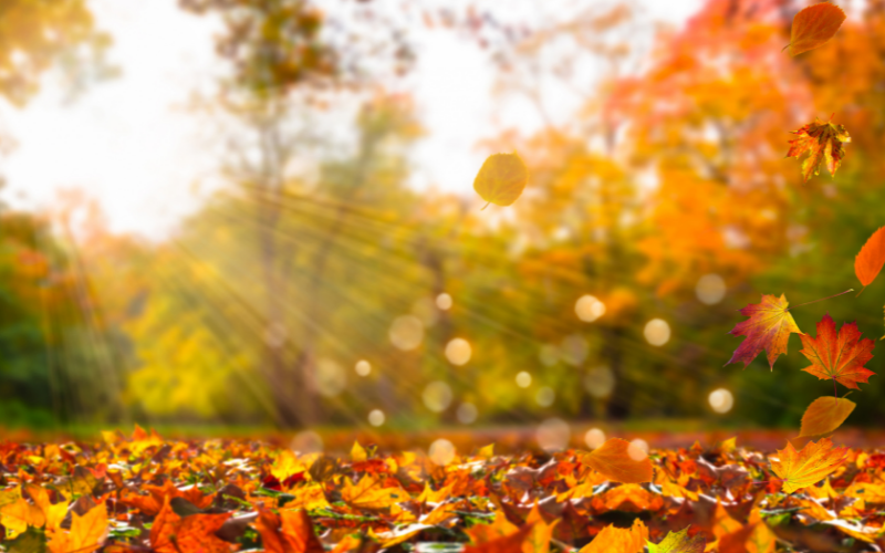 3 Ways to Prep Your Plumbing for Fall